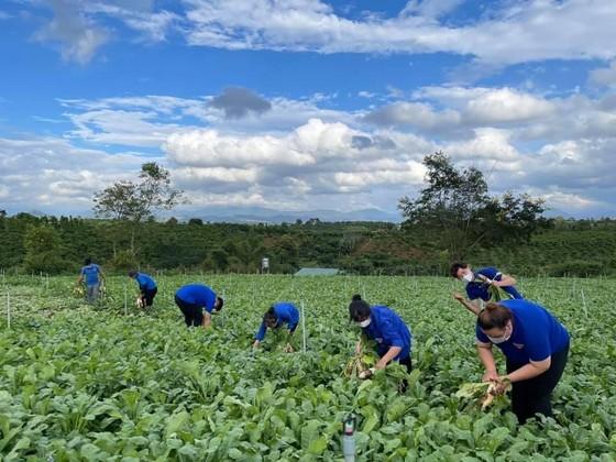 Nhiều loại nông sản ở miền Nam sắp cung vượt cầu ảnh 1