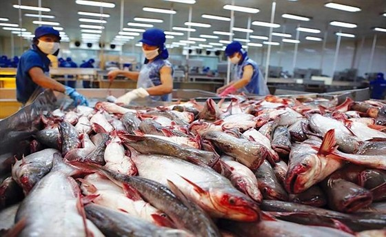 Thế giới đang cần nhập thủy sản Việt Nam, nhưng nhiều nhà máy lại đóng cửa ảnh 1