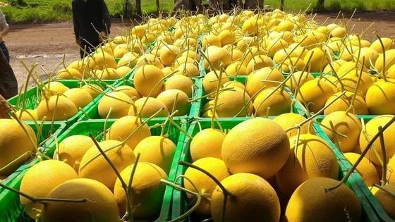 Từ ngày 3 đến 15-9, đưa 150.000 'combo nông sản' về từng phường ở TPHCM mỗi ngày ảnh 1