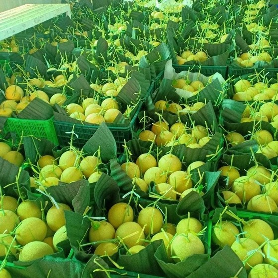 Từ ngày 3 đến 15-9, đưa 150.000 'combo nông sản' về từng phường ở TPHCM mỗi ngày ảnh 2