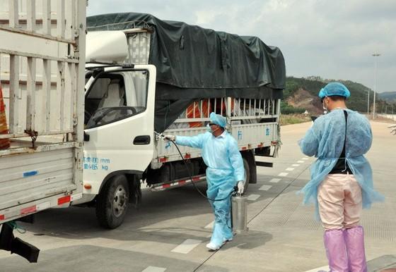 Trung Quốc tạm dừng nhập khẩu thanh long Việt Nam tại cửa khẩu Móng Cái ảnh 1