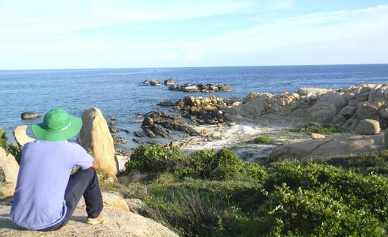 Các tình nguyện viên sẽ được tham gia bảo tồn rùa biển. ảnh 2