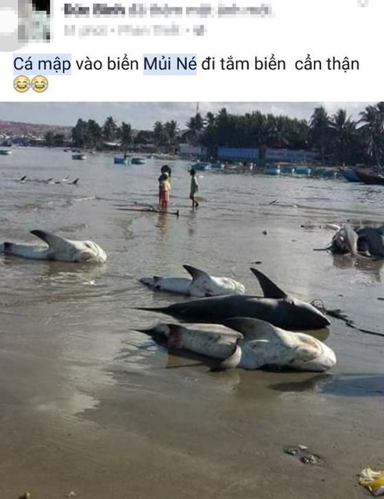 Thông tin cá mập xuất hiện ở biển Mũi Né là bịa đặt ảnh 2