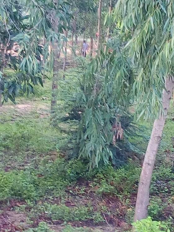 Nam thanh niên treo cổ trong rừng tràm ở Bình Thuận ảnh 1