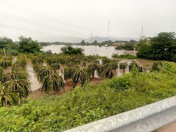 Hơn 100 căn nhà ở Bình Thuận bị ngập do mưa lũ ảnh 3