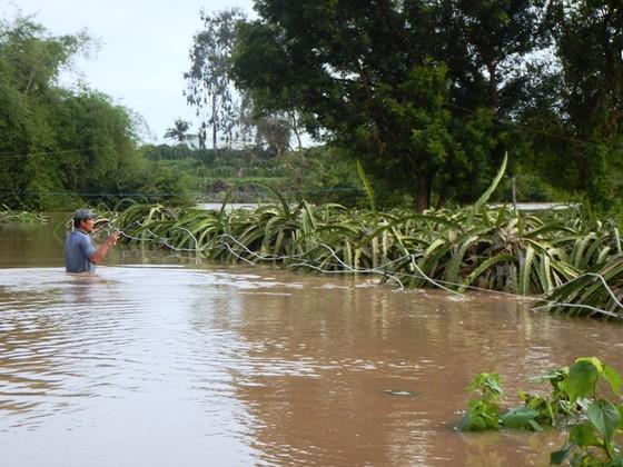 Bình Thuận: Lũ về đột ngột, người dân không kịp trở tay ảnh 3