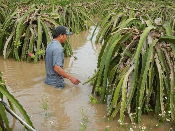 Bình Thuận: Lũ về đột ngột, người dân không kịp trở tay ảnh 2