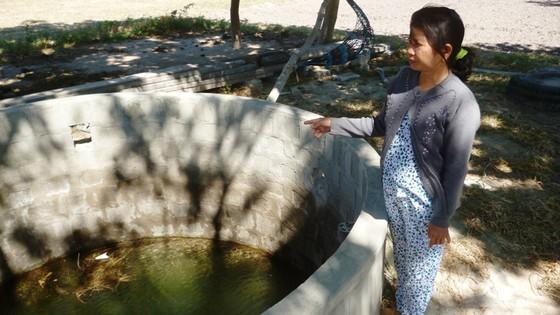 Cây chết gần bãi chứa tro xỉ than Nhiệt điện Vĩnh Tân 2 là do ngập úng ảnh 1