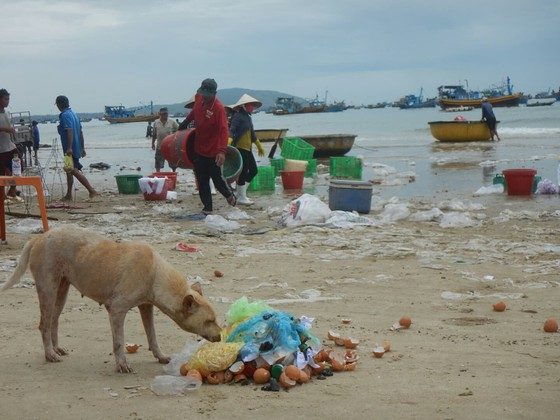 Ô nhiễm nghiêm trọng ở bãi Sau biển Mũi Né ảnh 6