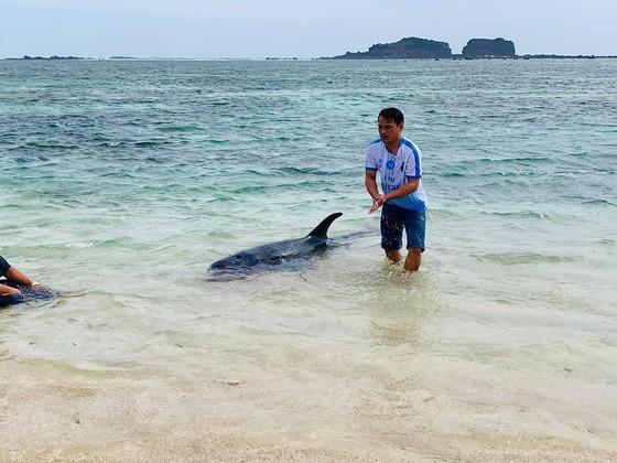 Xúc động cảnh ngư dân đảo Phú Quý giải cứu cá voi dài hơn 2m dạt vào bờ biển  ảnh 2