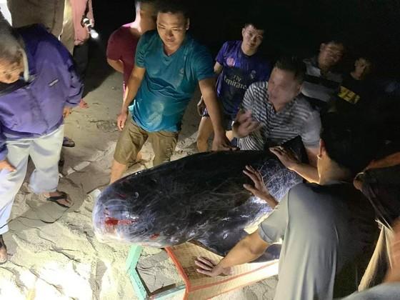 Xúc động cảnh ngư dân đảo Phú Quý giải cứu cá voi dài hơn 2m dạt vào bờ biển  ảnh 1