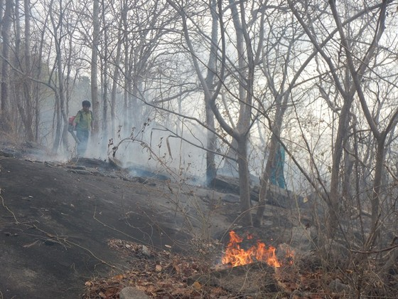 Khống chế vụ cháy rừng tại Khu bảo tồn thiên nhiên Tà Cú ảnh 1