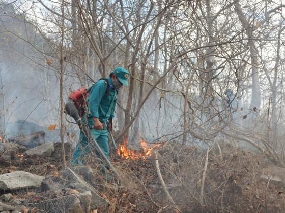Khống chế vụ cháy rừng tại Khu bảo tồn thiên nhiên Tà Cú ảnh 2