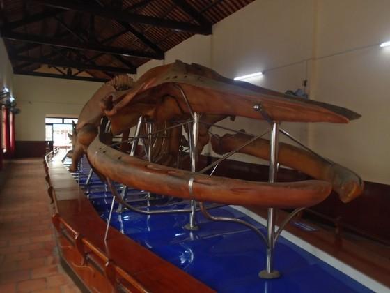 Nơi lưu giữ 100 bộ xương cá voi đón nhận Bằng xếp hạng Di sản Văn hóa phi vật thể cấp quốc gia ảnh 2