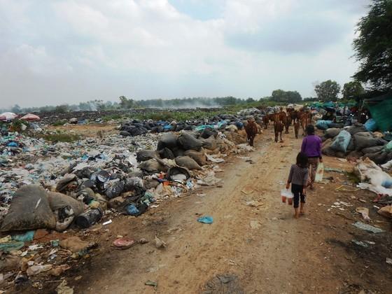 Hàng trăm con bò được chăn thả trên bãi rác lớn nhất thành phố Phan Thiết ảnh 6