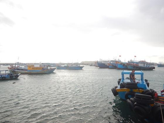 Khẩn cấp cứu hộ 15 thuyền viên tàu Panama gặp nạn trên vùng biển Phú Quý ảnh 1