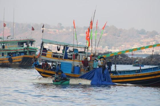 Bình Thuận: Cá voi nặng gần 10 tấn, dài 15m lụy ngoài khơi được đưa vào bờ ảnh 2