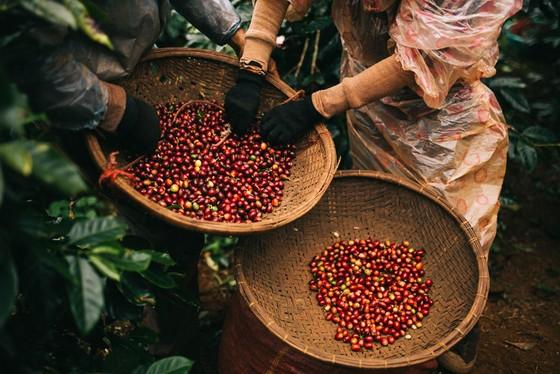 """Vượt mốc 80 cửa hàng cà phê, The Coffee House mở không gian """"cà phê hội nhập"""" ảnh 1"""