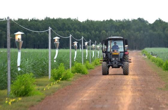 Hiệu quả từ nông nghiệp công nghệ cao ảnh 2