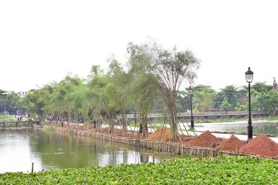 Lãnh đạo Thừa Thiên - Huế lên tiếng vụ trồng tre tại danh thắng Kinh thành Huế ảnh 1