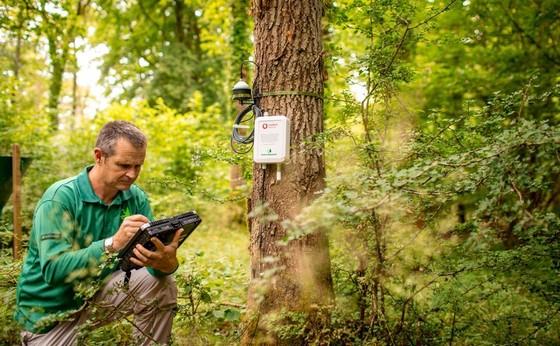 Giám sát rừng  bằng IoT             ảnh 1