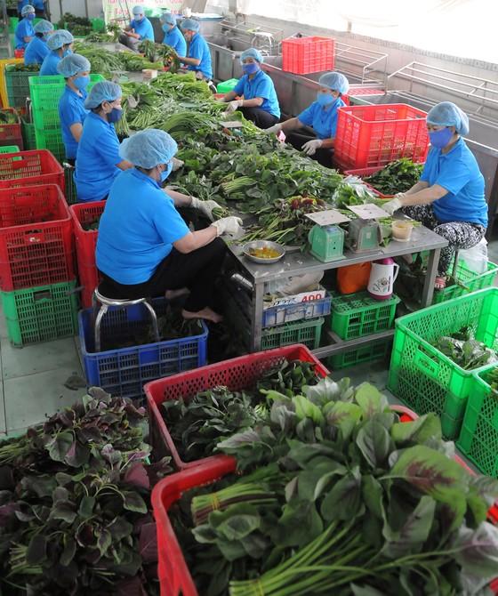 Doanh nghiệp chế biến nông sản: Cạnh tranh tốt với hàng ngoại ảnh 2