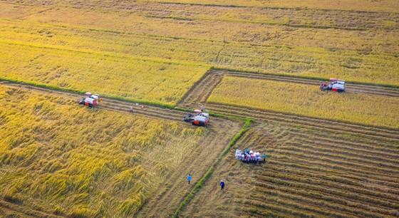 Tính toán giảm thâm canh lúa gạo ở ĐBSCL   ảnh 1
