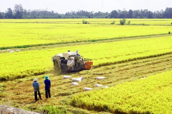 Từng bước 'đánh thức' doanh nghiệp và nông dân ảnh 1