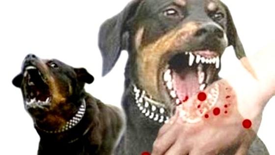 2 cháu bé tử vong vì chó dại cắn mà gia đình không hay biết ảnh 1