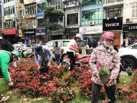 """Công ty Công viên cây xanh Hà Nội: Khó thể đảm bảo không tái diễn cảnh """"hôi"""" hoa ảnh 2"""
