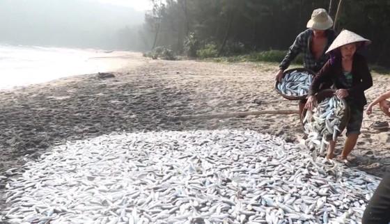 """Video: Kéo """"lưới rồng"""" bắt 2 tấn cá  ảnh 3"""