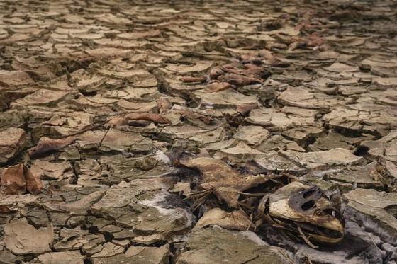 Cây lương thực khô cháy, chết dần vì hạn hán kéo dài ở khu vực Trung Trung bộ ảnh 8
