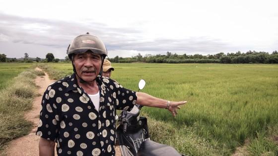 Cây lương thực khô cháy, chết dần vì hạn hán kéo dài ở khu vực Trung Trung bộ ảnh 9