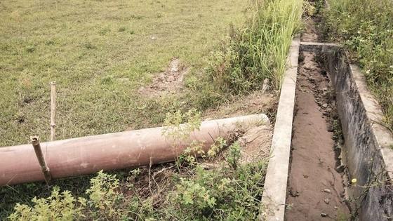 Cây lương thực khô cháy, chết dần vì hạn hán kéo dài ở khu vực Trung Trung bộ ảnh 11