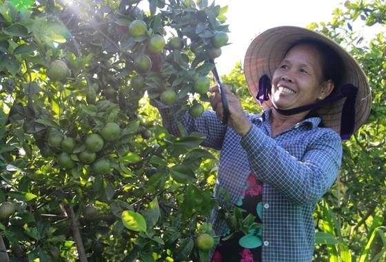 Đồng hành cùng nông dân phát triển chuỗi giá trị các sản phẩm chủ lực của Thừa Thiên – Huế ảnh 3