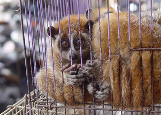 Thừa Thiên - Huế: Săn bắt, giết, nuôi, nhốt động vật rừng trái pháp sẽ bị phạt tới 400 triệu đồng ảnh 1