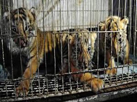 Thừa Thiên - Huế: Săn bắt, giết, nuôi, nhốt động vật rừng trái pháp sẽ bị phạt tới 400 triệu đồng ảnh 2