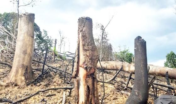 Vì sao Thừa Thiên – Huế để mất 807ha rừng tự nhiên? ảnh 1