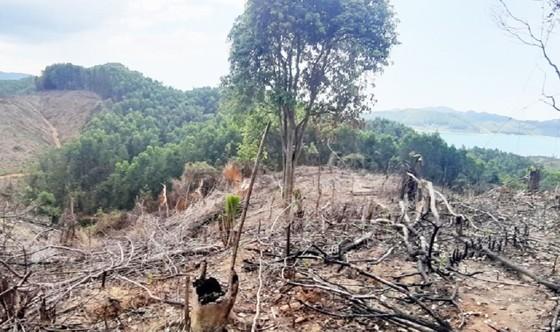 Vì sao Thừa Thiên – Huế để mất 807ha rừng tự nhiên? ảnh 2