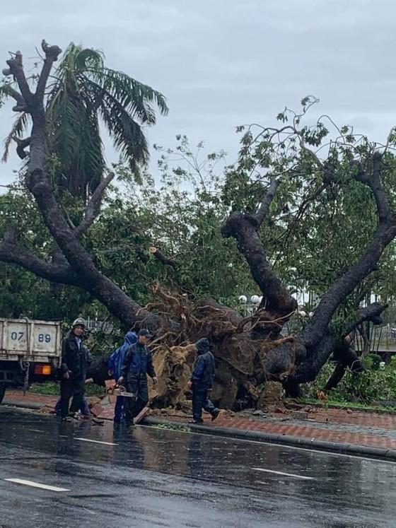 Tiếc nuối cây xà cừ cổ nhất cố đô Huế bị bão đánh bật gốc ảnh 3
