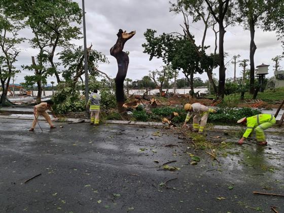 Tiếc nuối cây xà cừ cổ nhất cố đô Huế bị bão đánh bật gốc ảnh 6