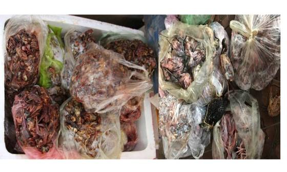 Lại phát hiện cơ sở kinh doanh trữ hơn 200kg thịt chim bốc mùi ảnh 2
