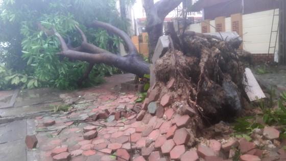 Hà Tĩnh: Bão số 2 đổ bộ khiến hàng loạt cây xanh, cột điện, biển hiệu... bị gãy đổ ảnh 24