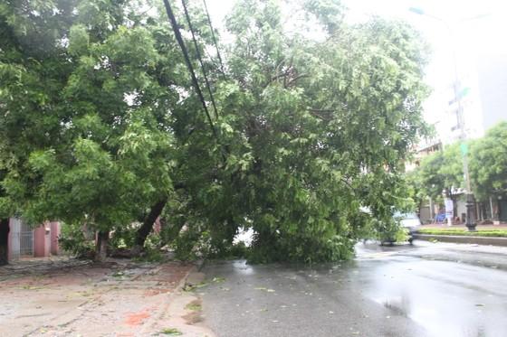 Hà Tĩnh: Bão số 2 đổ bộ khiến hàng loạt cây xanh, cột điện, biển hiệu... bị gãy đổ ảnh 16