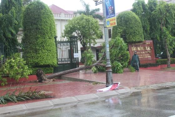 Hà Tĩnh: Bão số 2 đổ bộ khiến hàng loạt cây xanh, cột điện, biển hiệu... bị gãy đổ ảnh 9