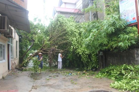 Hà Tĩnh: Bão số 2 đổ bộ khiến hàng loạt cây xanh, cột điện, biển hiệu... bị gãy đổ ảnh 13