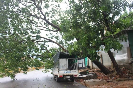 Hà Tĩnh: Bão số 2 đổ bộ khiến hàng loạt cây xanh, cột điện, biển hiệu... bị gãy đổ ảnh 21
