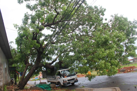 Hà Tĩnh: Bão số 2 đổ bộ khiến hàng loạt cây xanh, cột điện, biển hiệu... bị gãy đổ ảnh 25