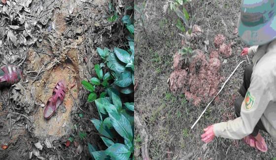 Voi rừng xuất hiện tại Vườn Quốc gia Vũ Quang, Hà Tĩnh ảnh 1