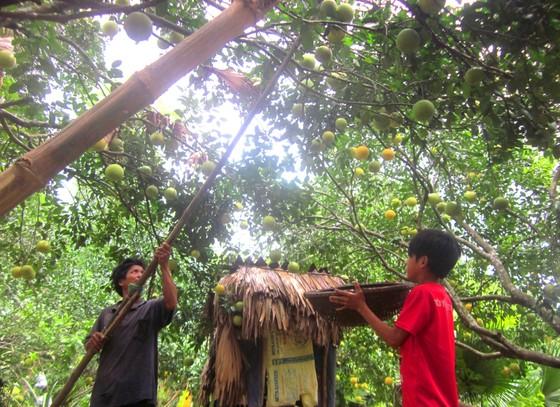 Hà Tĩnh: Xã Phúc Trạch thu 39 tỷ đồng từ cây gió trầm ảnh 1